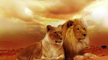 Trading und Höhle der Löwen
