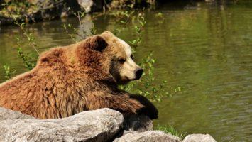Zeit der Bullen, Zeit der Bären: Saisonale Chancen für die Bären