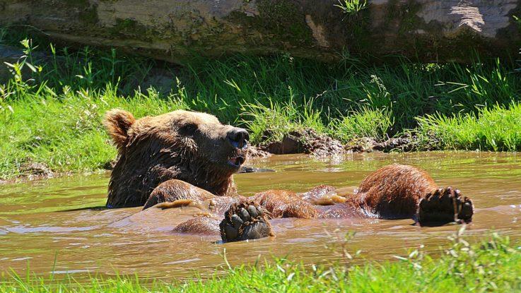 Kommt der Bär im DAX zurück?
