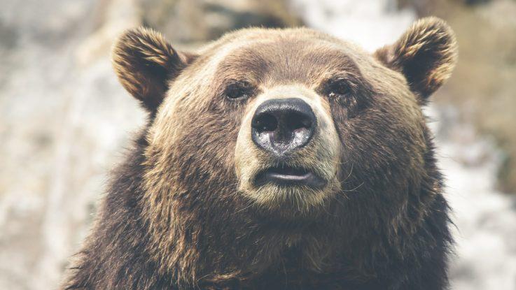 Bullen- oder Bärenmarkt