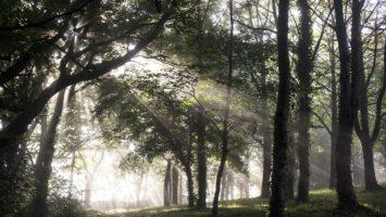 Langfristig wächst der Wert der Forstbestände, Vorbild für das Value Investing - Bildquelle: Pixabay, unter Pixabay License