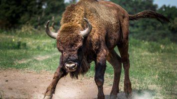 Bullenmarkt oder Bärenmarkt im DAX?