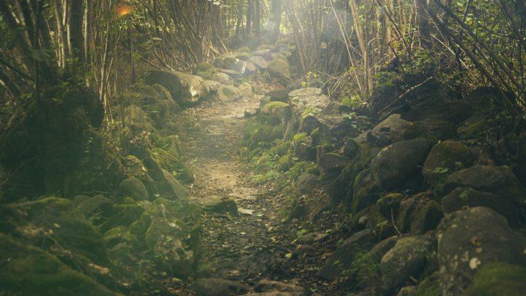 Investieren mit Ökologischer Ausrichtung - Umweltaktien